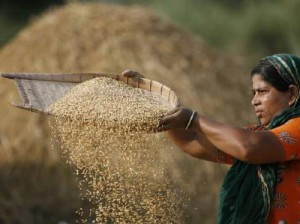 bangladeshi_rice_400