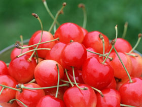 Cherry-Fruit-Wallpaper-fruit-6333997-1024-768