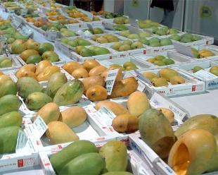 Major worry grips Indian mango traders over Bangladesh export