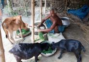 livestock village