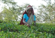 Bangladeshi tea workers are mostly indigenous people from India who migrated during British rule. They are among the most deprived and marginalized communities in the country. (File photo from UCAN Bangladesh archive)