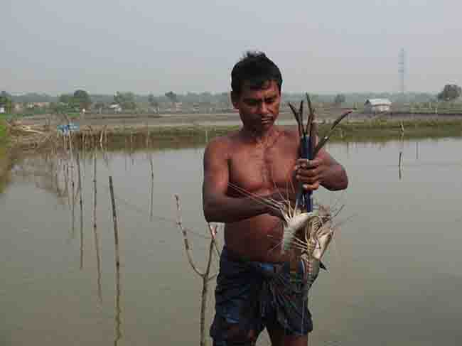 Shrimp Farmer